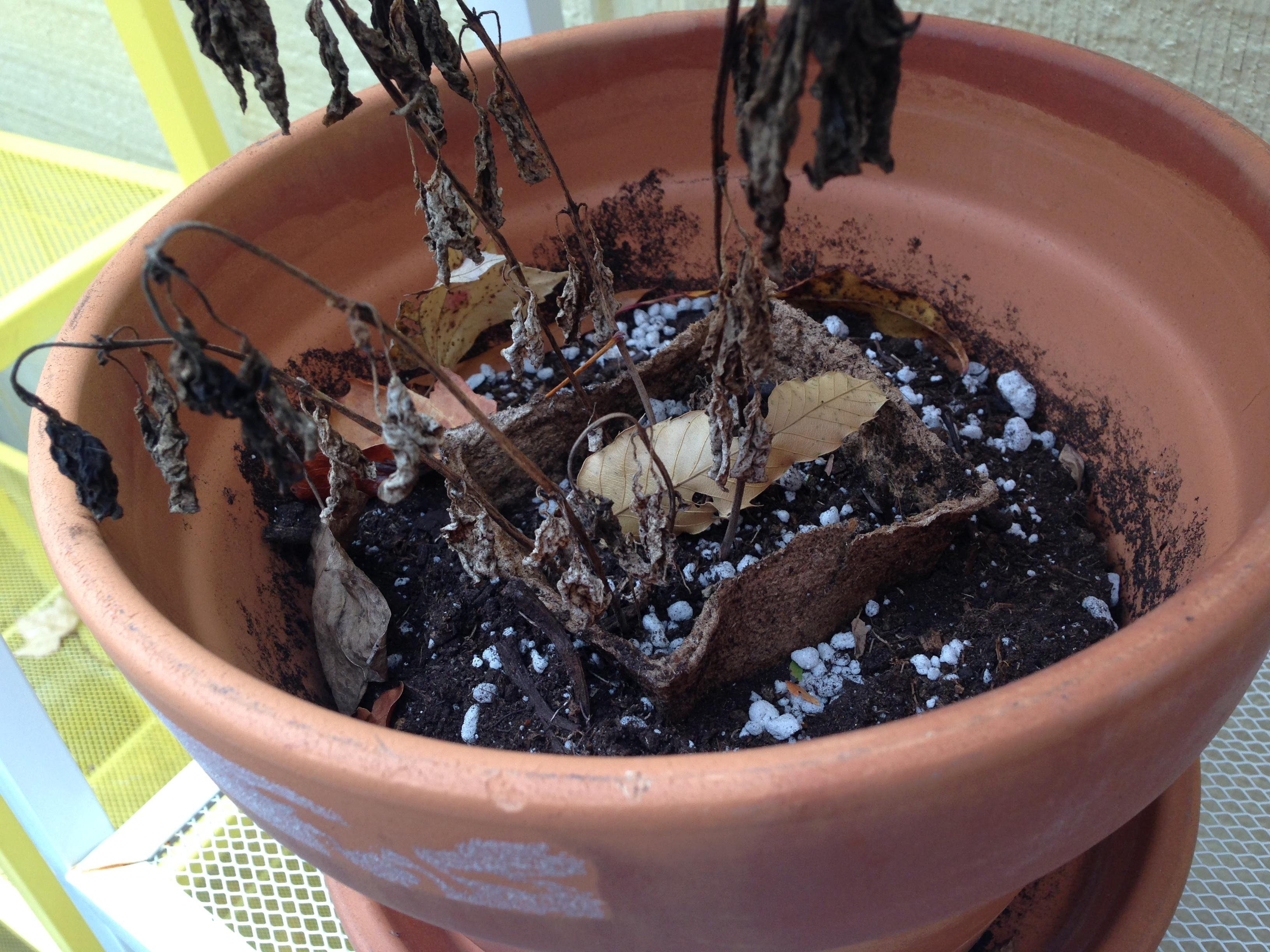 starting-an-herb-garden-supernovawife-4