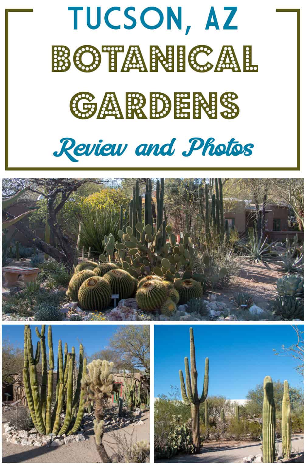 Looking for travel ideas for Tucson or while you're in the Southwest USA? Check out the Tucson Botanical Gardens and read my review and photos