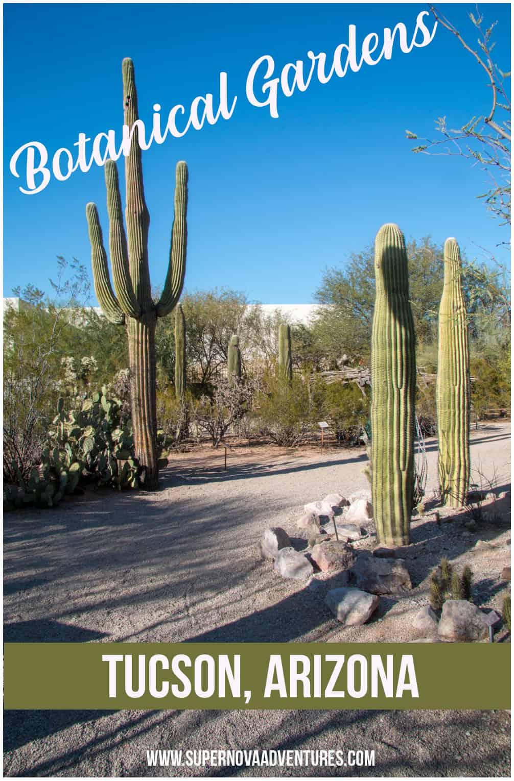 Review and photos of the Tucson Botanical Gardens in Arizona. Stunning desert landscape and gardens in the city