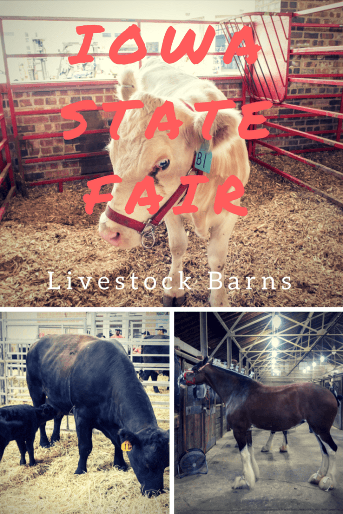 Iowa State Fair | Livestock | Midwest USA Travel | Des Moines Travel